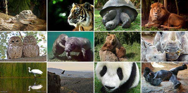 Endangered Animals List With Pictures And Names Yourtripto