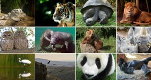 Endangered Animals List with Pictures and Names